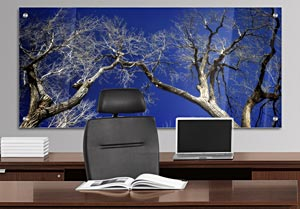 Touching Trees - Office Art on Acrylic