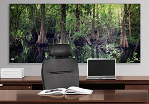 Florida Swamp - Office Art on Acrylic