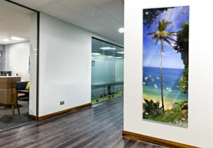Huge Palm Tree - Office Art on Acrylic