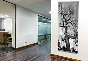 Windsor Park Tree - Office Art on Acrylic