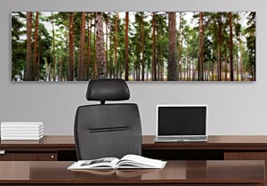 Pine Trees - Office Art on Acrylic