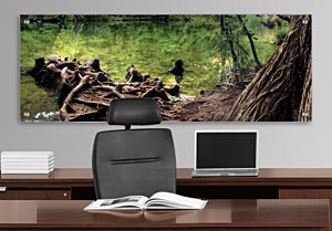 Tree Roots - Office Art on Acrylic
